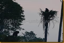 Guinea Bissau0795