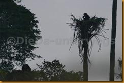 Guinea Bissau0808
