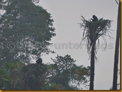Guinea Bissau0810