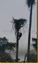 Guinea Bissau0811