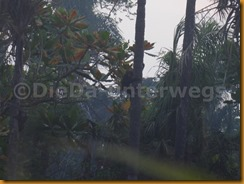 Guinea Bissau0816