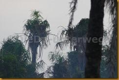 Guinea Bissau0825