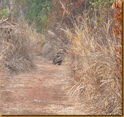 Guinea Bissau0850