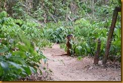 Guinea Bissau0885