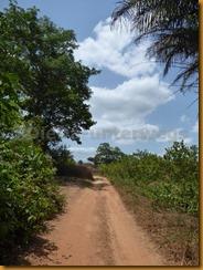 Guinea Bissau0949