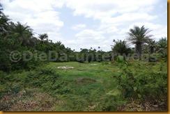 Guinea Bissau0955