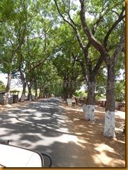 Guinea Bissau1060