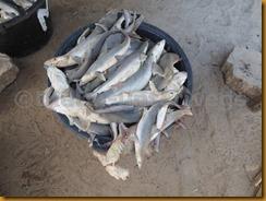 Guinea Bissau1085