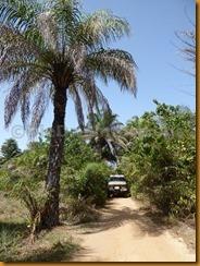 Guinea Bissau1110
