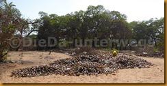 Guinea Bissau1163