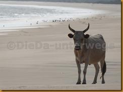 Guinea Bissau1169