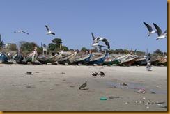Senegal II 0117