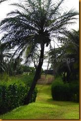 Senegambia 0092