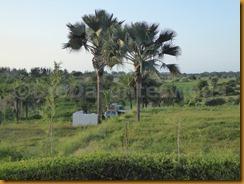 Senegambia 0108