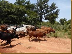 Burkina Faso0010