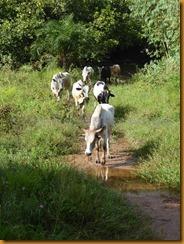 Burkina Faso0119