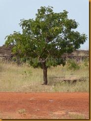 Burkina Faso0618