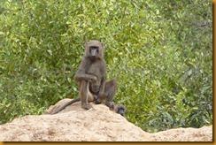Burkina Faso0936