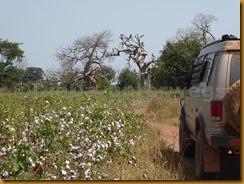 Burkina Faso0973