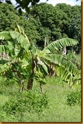 Senegambia 0276