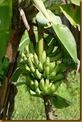 Senegambia 0277