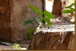 Senegambia 0284