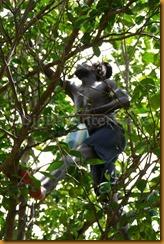 Senegambia 0488