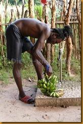 Senegambia 0561