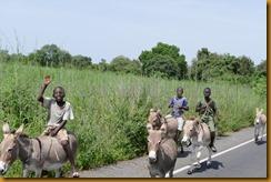 Senegambia 0579