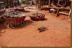 Benin1051