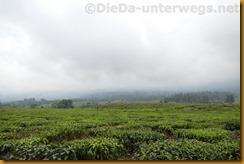 Kamerun1489