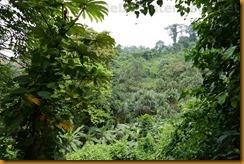 Kamerun1597