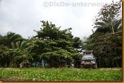 Kamerun2185