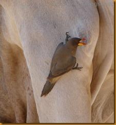 Namibia0033