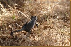 Namibia0322
