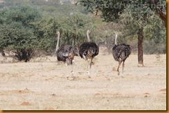 Namibia0359