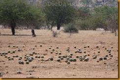 Namibia0360