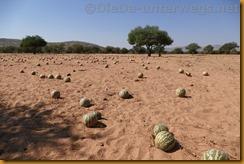 Namibia0371