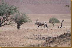 Namibia0443