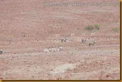 Namibia0498