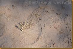 Namibia0541