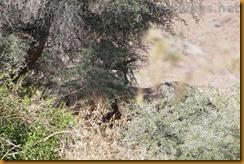 Namibia0543