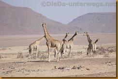 Namibia0586