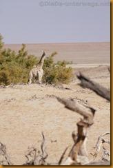 Namibia0594