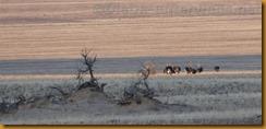 Namibia0621