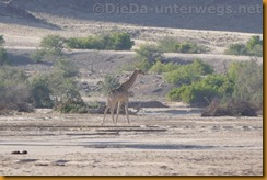 Namibia0635
