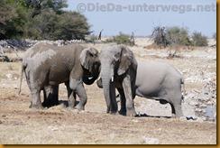 Namibia0732