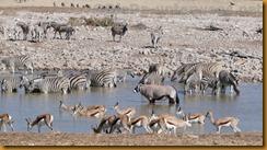 Namibia0738