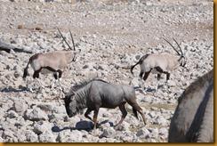 Namibia0897
