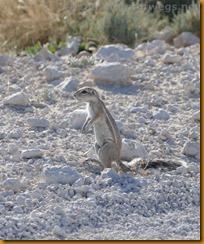 Namibia0946
